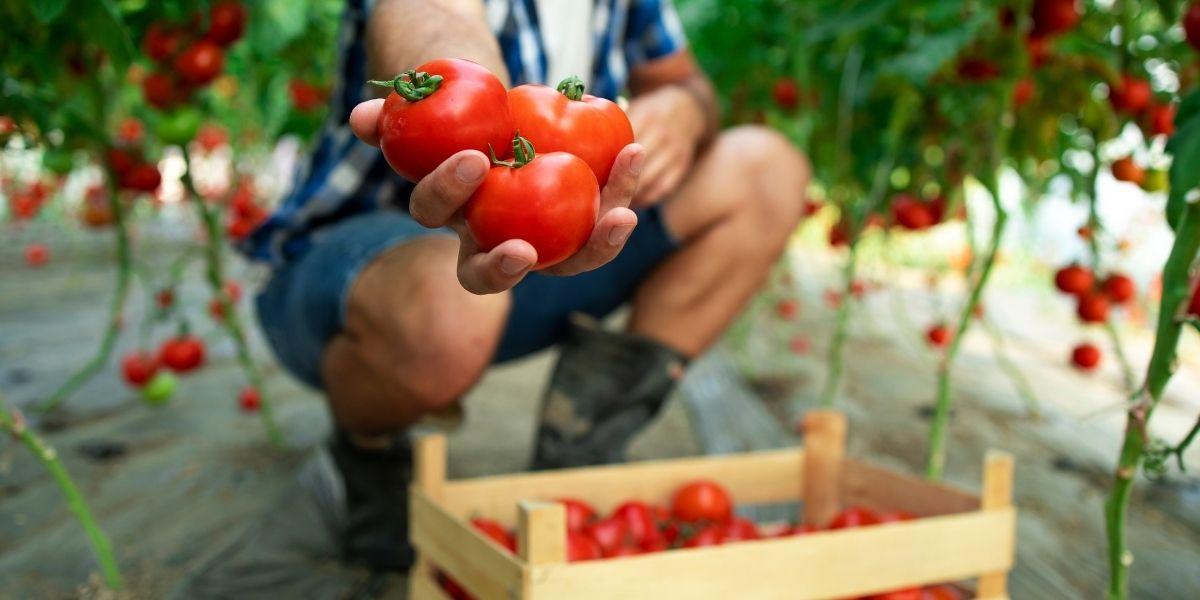 13 Good Reasons to Eat Organic